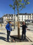 thumb_PREMIER-TECH-RENNES-2017-Replantation_-Marronniers-Guillaume-SELLIN-MR-LORHO