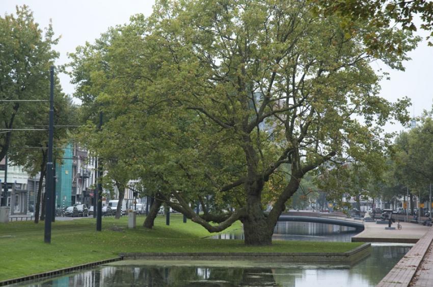 THE GREEN CITY : Rotterdam, ville-pilote en matière de jardins urbains et de toitures végétalisées, est prête à faire face aux changements climatiques